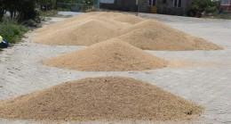 Trakya'da buğday hasadı devam ediyor