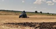 Buğdayın tarladaki yolcuğu hasat ile son buluyor