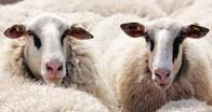 Hayvancılık yatırımları desteklenecek