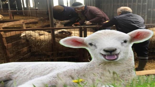 Pınarhisar'da hayvan hastalıklarına geçit yok